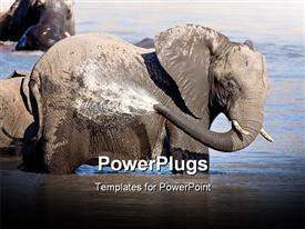 Large African Elephant bathing in the waters of Mpondo in Kruger  ppt background of wildlife