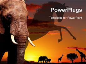 African elephant in savanna at sunset, close-up powerpoint design layout