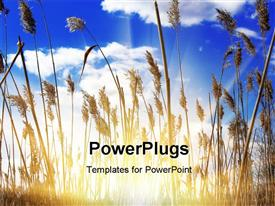 PowerPoint template displaying beautiful sunshine and cane thickets on blue sky