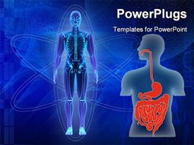 PowerPoint template displaying human body showing skeleton and human torso with digestive tract in red
