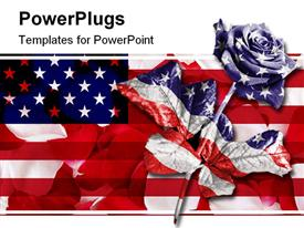 PowerPoint template displaying single rose against a black background digitally enhanced in the colors of the American flag