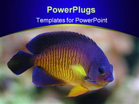 Angel fish  ppt background of underwater