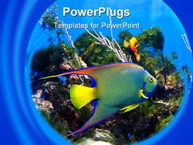 This colorful Queen Angel Fish is swimming amongst some coral powerpoint design layout
