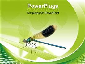 Banded Demoiselle in front of a white background powerpoint theme