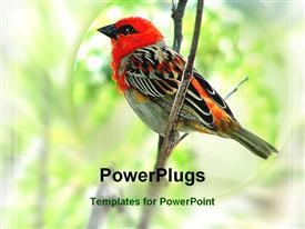 PowerPoint template displaying a cardinal bird with greenery in the background