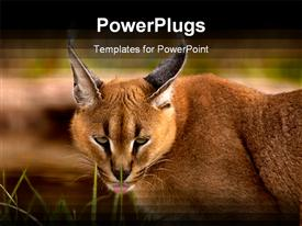 Caracal cat sneaks around in the foliage powerpoint template