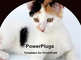 PowerPoint template displaying large hairy black and white cat with black background