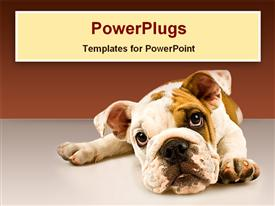 PowerPoint template displaying close-up puppy dog