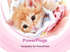PowerPoint template displaying brown furry pussy cat in a pink knitted cloth