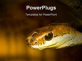 Close-up of a Snake powerpoint design layout