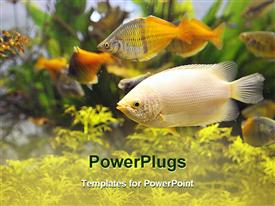 PowerPoint template displaying colorful view inside a busy aquarium in the background.
