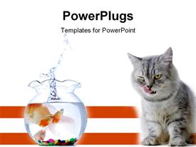 Concept - cat and gold fish over the white background powerpoint template