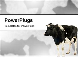 PowerPoint template displaying black and white cow on matching black and white background