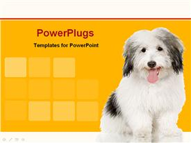 PowerPoint template displaying white and black dog with yellow and white red stripe background