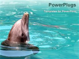 PowerPoint template displaying dolphin playing in water