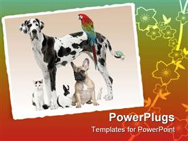 Group of pets - Dog cat bird reptile rabbit - in front of a white background powerpoint theme