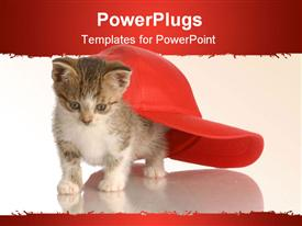 Kitten playing under red baseball cap presentation background