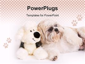 PowerPoint template displaying little Shih-Tzu dog next to a stuffed animal in the background.