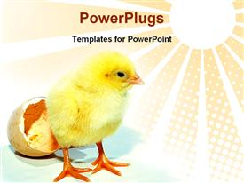 New born chicken came out from egg powerpoint design layout