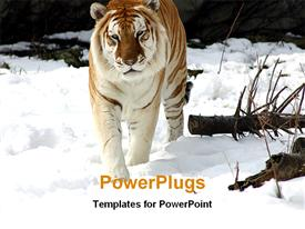 PowerPoint template displaying one tiger walking on snow in the background.