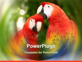 PowerPoint template displaying pair of scarlet macaws clean one another. taken in xcaret Mexico in the background.