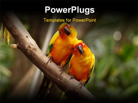 PowerPoint template displaying a pair of parrots with blurred background