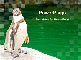 PowerPoint template displaying penguin beside water pool