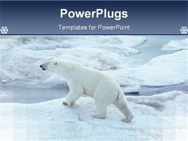 PowerPoint template displaying a healthy polar bear walking on ice in Antarctica