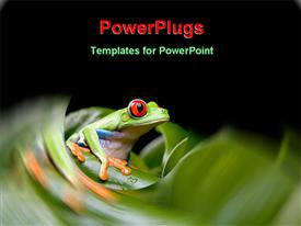 PowerPoint template displaying red eyed tree frog on a plant in the background.