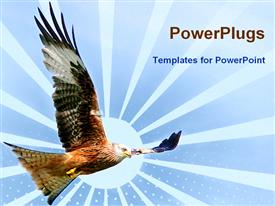 Red kite eagle flying in a sky powerpoint design layout