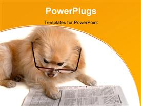 PowerPoint template displaying hairy dog with eye glasses reading pages of newspaper