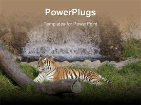 PowerPoint template displaying tiger resting on green vegetation with waterfall and log of wood