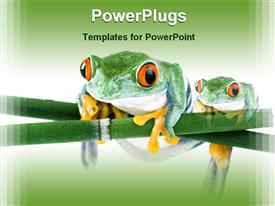 PowerPoint template displaying tree frogs on leaf