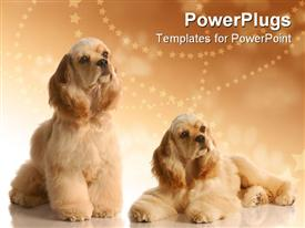 PowerPoint template displaying two big fluffy dogs on a cozy brown background