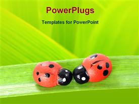 PowerPoint template displaying two bugs on a leaf