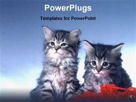 PowerPoint template displaying blue and white background with two kittens looking on