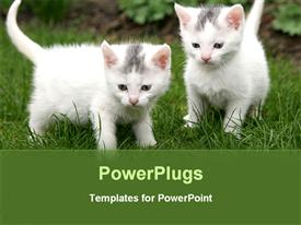 PowerPoint template displaying two kittens with greenery in the background