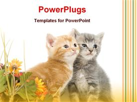 PowerPoint template displaying two kittens sitting together next to bunch of yellow flowers