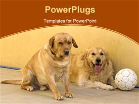 PowerPoint template displaying two golden retrievers sit on floor with soccer ball