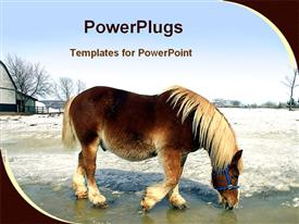 PowerPoint template displaying workhorse is drinking water