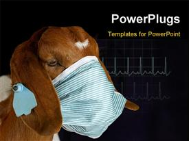Goat wearing medical mask - purebred south African boer powerpoint theme