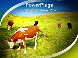 PowerPoint template displaying beautiful view with grazing cows and blue sky