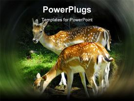 PowerPoint template displaying two deer in forest nature wild animals spring bambi wildlife environmental sustainability