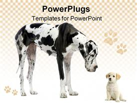 PowerPoint template displaying great Dane harlequin and puppy Labrador looking at each other