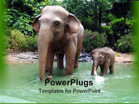 Jungle elephant display in a theme park presentation background