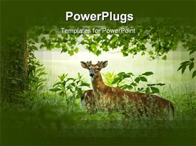 PowerPoint template displaying a deer with a lot of greenery