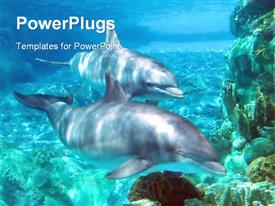 Under water beauty (Dolphins)  underwater powerpoint theme