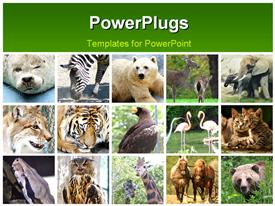 PowerPoint template displaying nine wild animals at the zoo mix in the background.