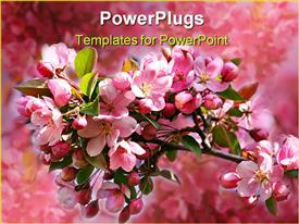 PowerPoint template displaying pink apple blossoms against a blue sky