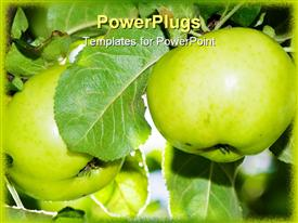 Two apples in a tree green garden presentation background